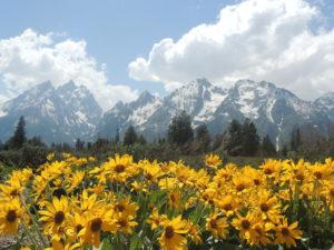 grand-teton-national-park9