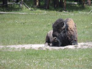 yellowstone-national-park2