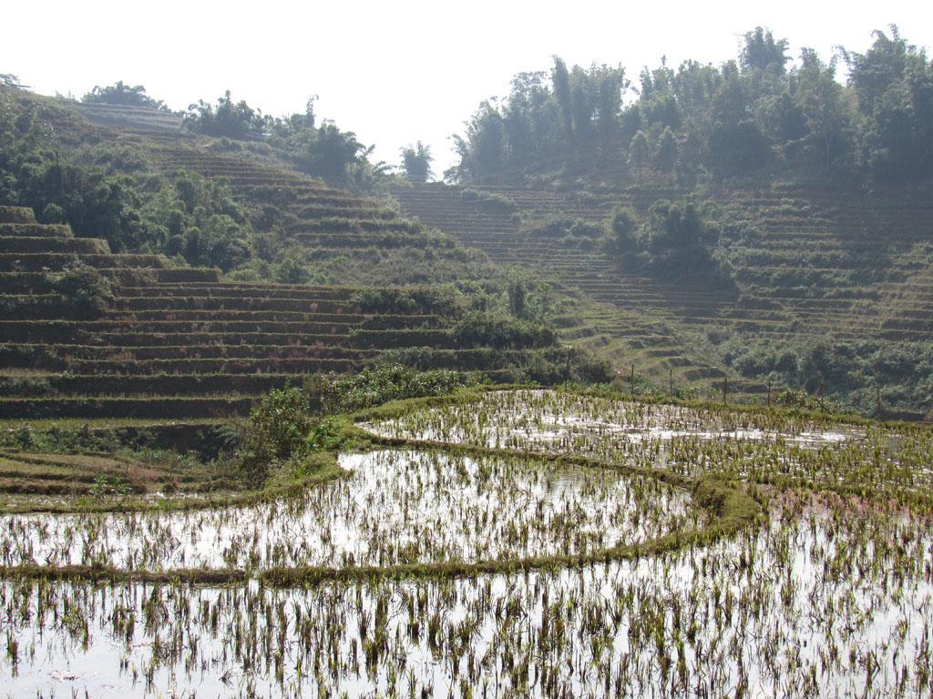 Sapa e os terraços de arroz no Vietnã