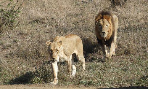 Kruger National Park: como fazer um safári na África do Sul